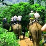 tailandia-elefantes