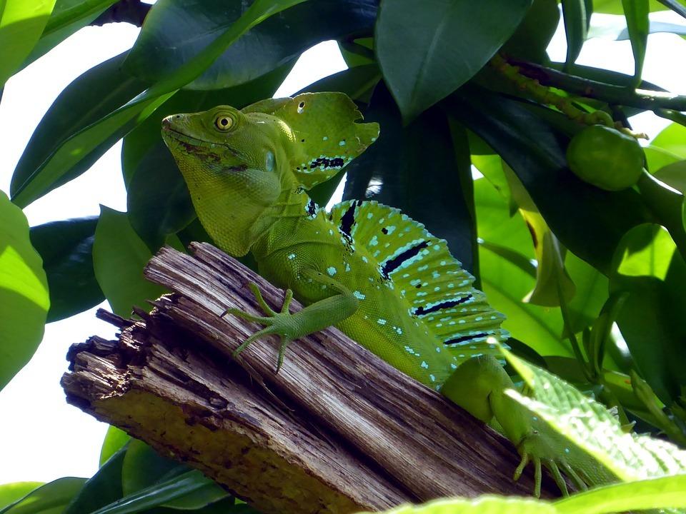 Animales, imprescindibles de Costa Rica
