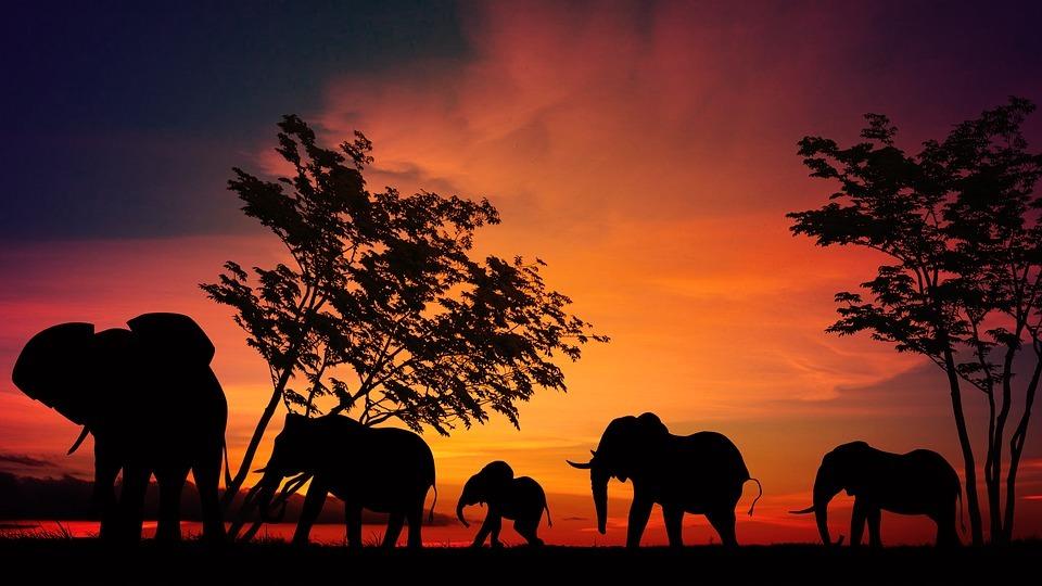 Amaneceres en el Serengeti