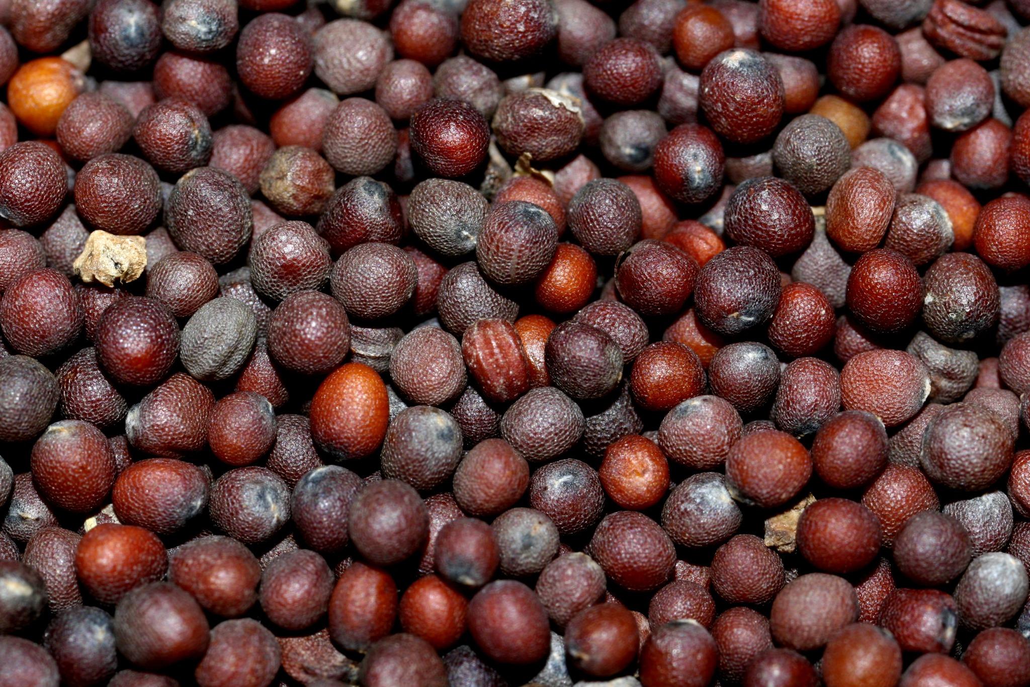 especias mostaza negra