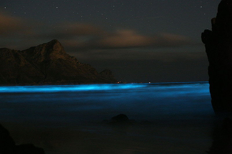 Maldivas - donde ver la bioluminiscencia