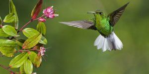 Fauna del Arenal de Costa Rica