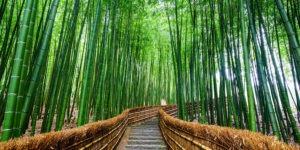 Bosque-bambu-GrandVoyage