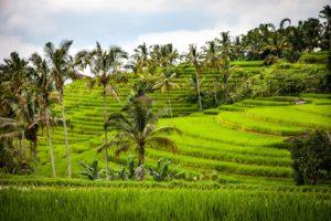 cosas-que-hacer-en-asia-campos-arroz-GrandVoyage