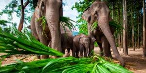 Elefantes en Tailandia - Qué hacer en Asia