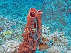 Esponjas de tubo - Mejores playas para hacer snorkel