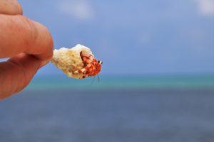 Cangrejo ermitaño - Mejores playas para hacer snorkel