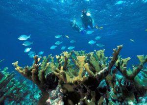 Consejos para hacer snorkel