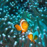 Mar-rojo-buceo-GrandVoyage