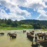 Sri-Lanka-campamento-reserva-elefantes
