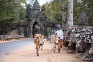Angkor Thom - Mujer camboyana con vacas