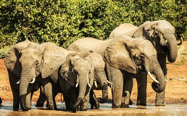 Sudafrica-Elefantes-Parque Nacional de Kruger-GrandVoyage