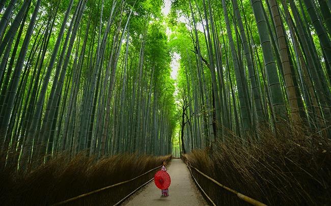 Japon-bosquedebambúdeArashiyama-Que ver en Kioto