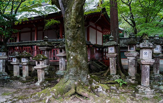 Japon-KasugaTaisha-GrandVoyage