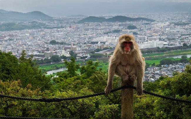 Japon-ParquedemonosArashiyama-GrandVoyage