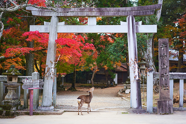 Japon-ParqueNara-GrandVoyage