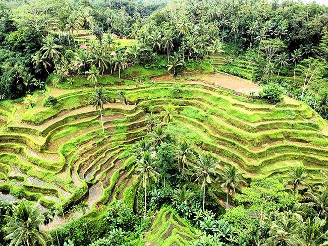 Indonesia-ArrozalesBali-GrandVoyage
