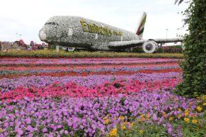 Miracle Garden que ver en Dubái