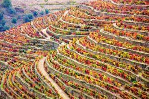 Portugal - Qué ver en el Valle del Douro - viñedos