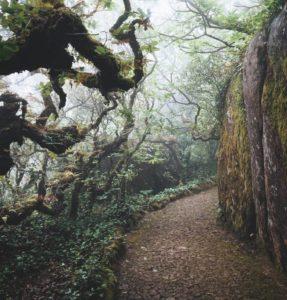 Qué ver en Madeira - Bosque Laurisilva