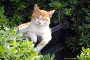 Curiosidades de Estambul - Gatos callejeros