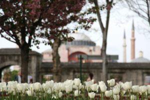 Tulipanes en Turquía