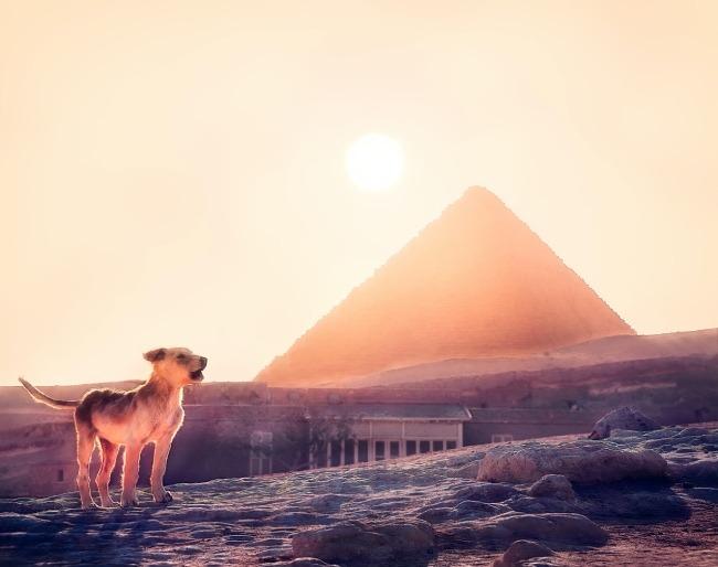 CURIOSIDADES DE EGIPTO - animales de compañía