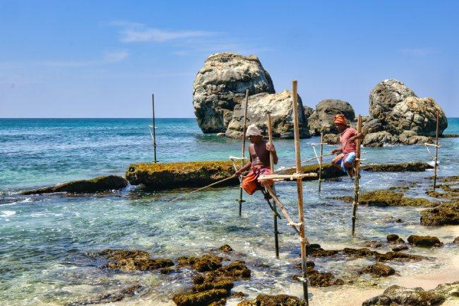 Pescadores zancudos de Sri Lanka2