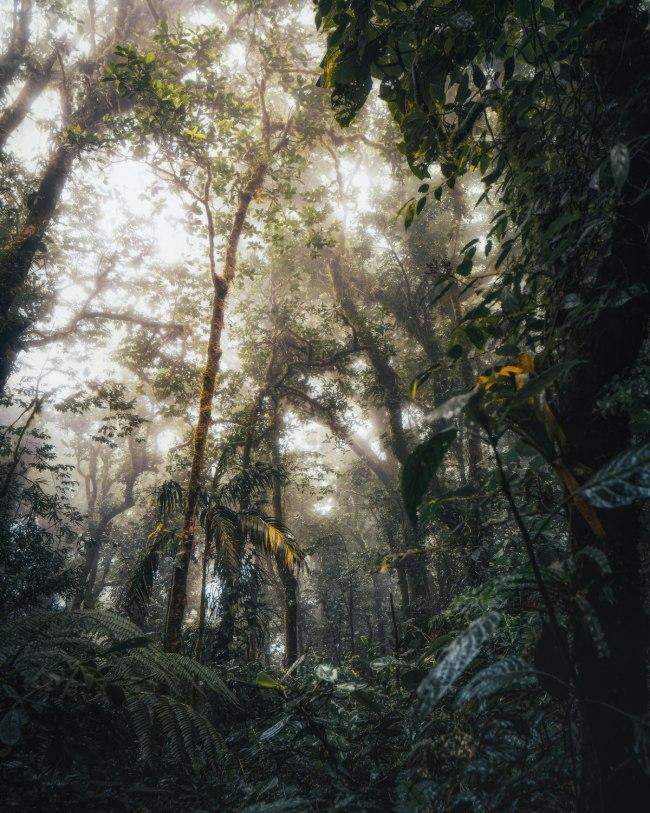 Monteverde en costa Rica