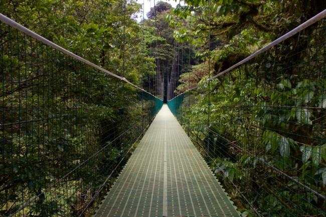 Puentes colgantes en Monteverde