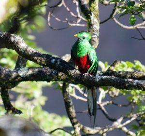 quetzal en Costa Rica