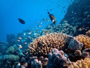 Peces y corales en el Mar Rojo