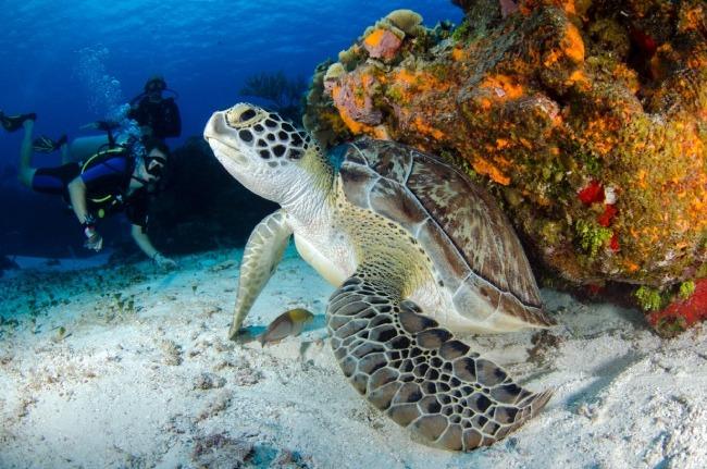 Buceo con tortugas en Seychelles